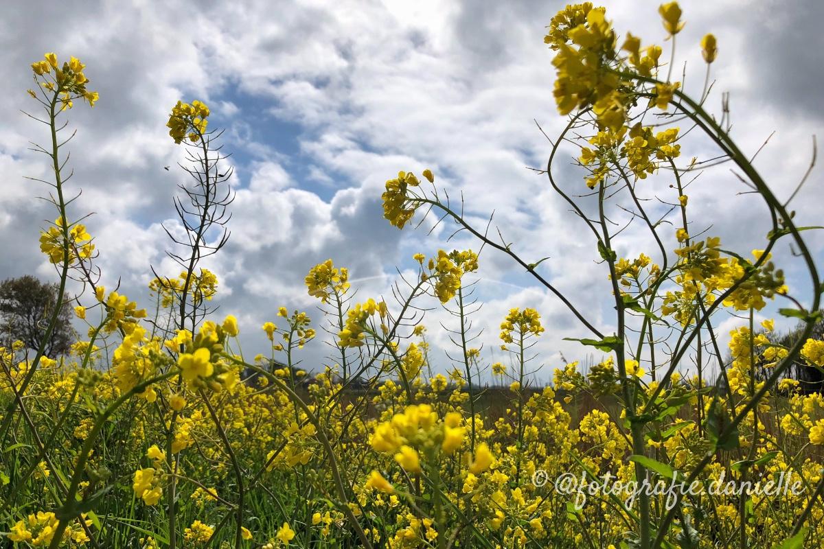 ©fotografie Daniëlle van der Ploeg beautiful nature 1
