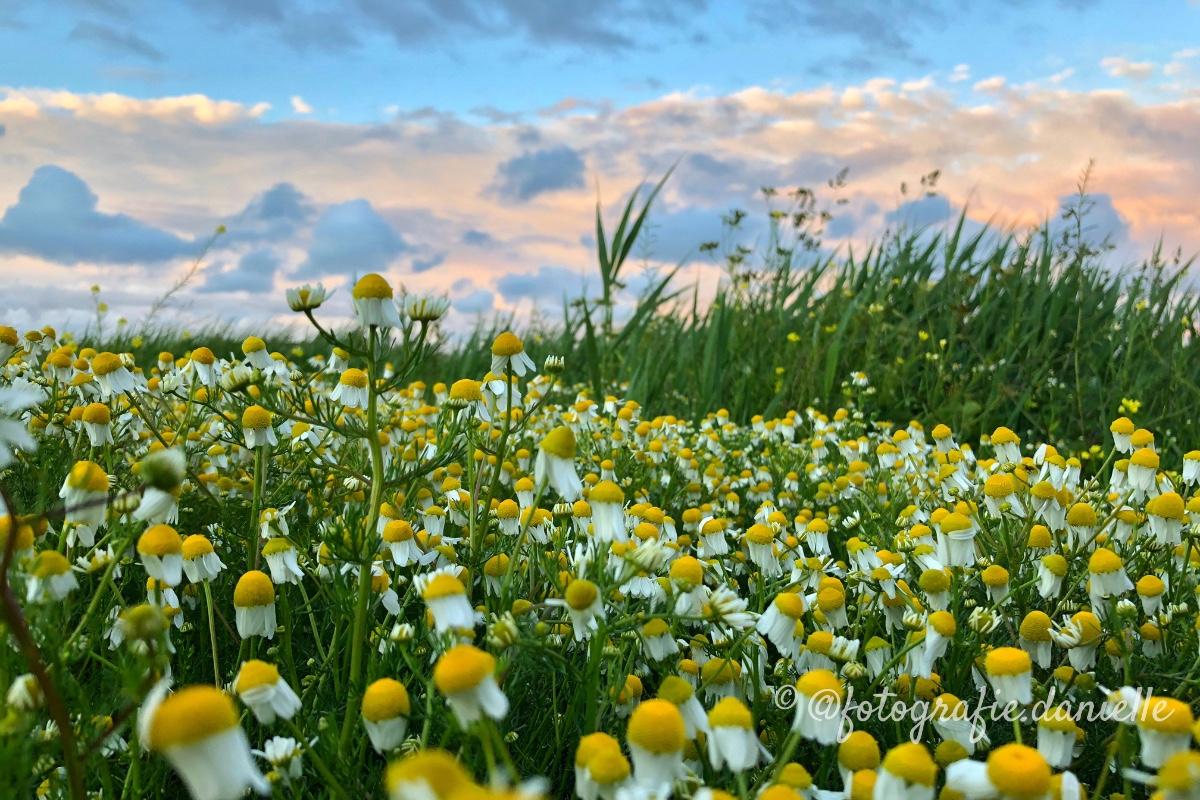 ©fotografie Daniëlle van der Ploeg beautiful nature 2