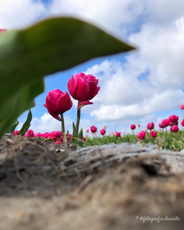 ©fotografie Daniëlle van der Ploeg focus5
