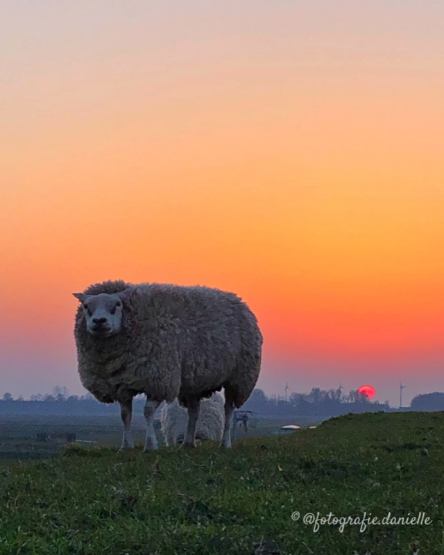 ©fotografie Daniëlle van der Ploeg magic moments 7