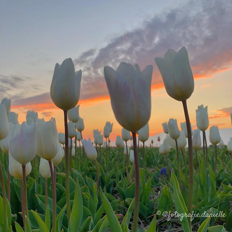 ©fotografie Daniëlle van der Ploeg sunset 1