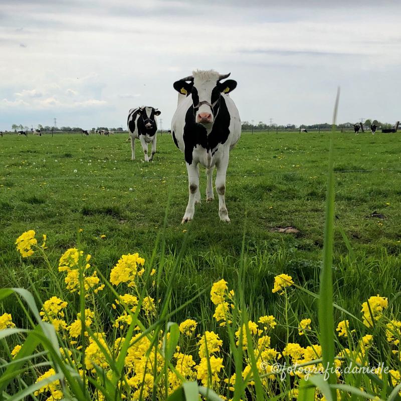 ©fotografie Daniëlle van der Ploeg sweet animals 1