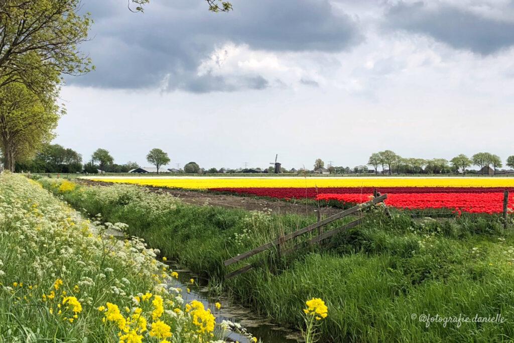 ©fotografie Daniëlle van der Ploeg tulips tulpen liggend 21