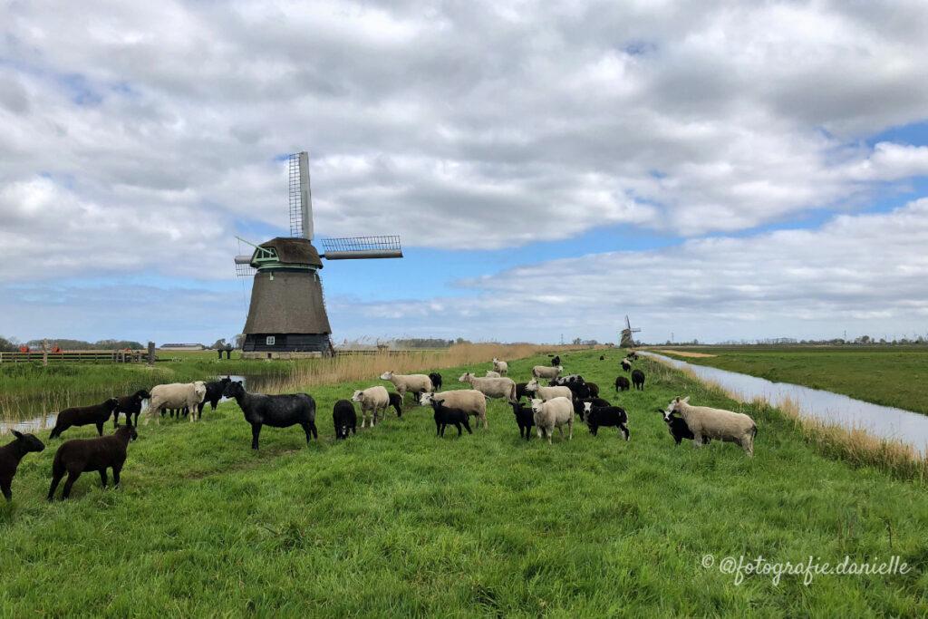 ©fotografie Daniëlle van der Ploeg windmill 1