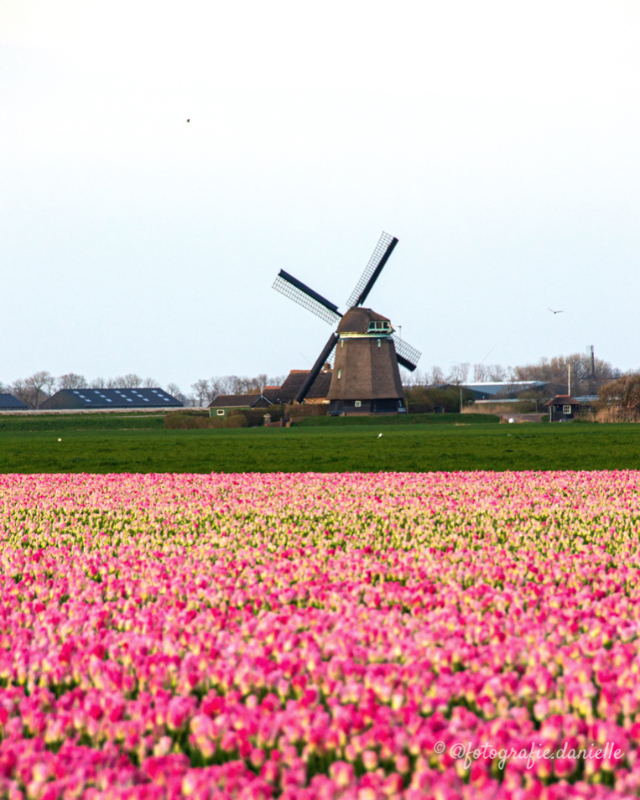 ©fotografie Daniëlle van der Ploeg windmill 12