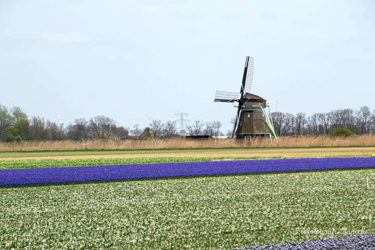 ©fotografie Daniëlle van der Ploeg windmill 3