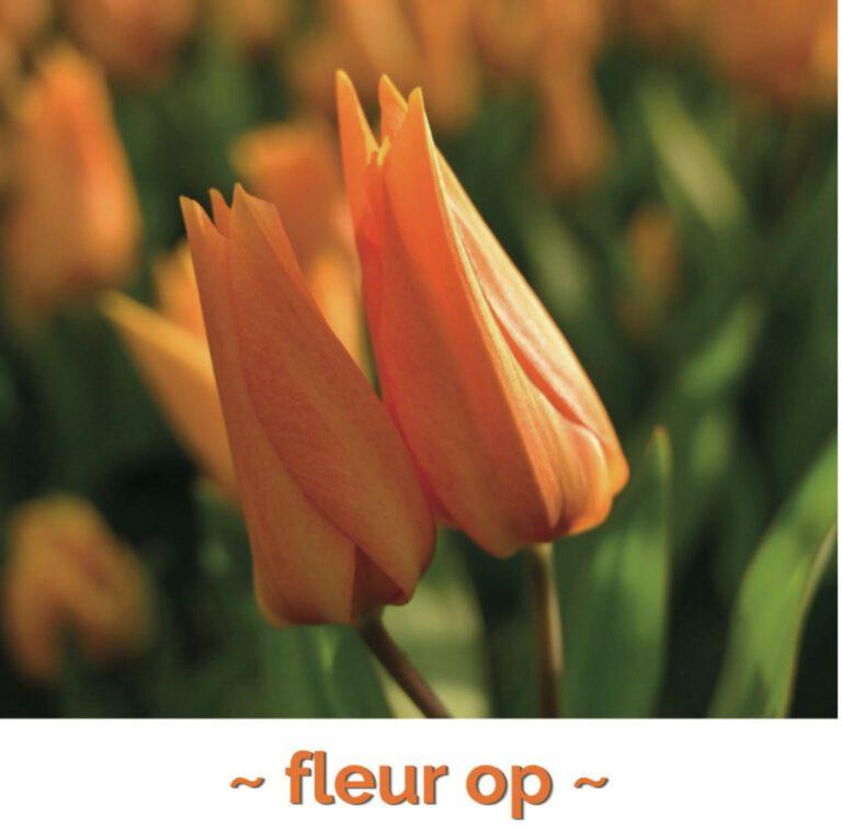 Fleur op