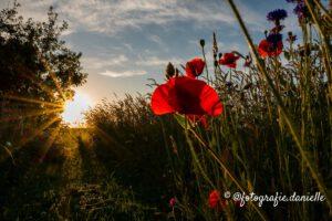 zomerbloemen door ©fotografie Daniëlle van der Ploeg-01